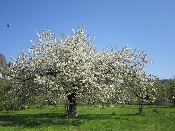 la fleur du dimanche bleu pervenche blanc cerisier et rouge caf cela am ne t il au. Black Bedroom Furniture Sets. Home Design Ideas