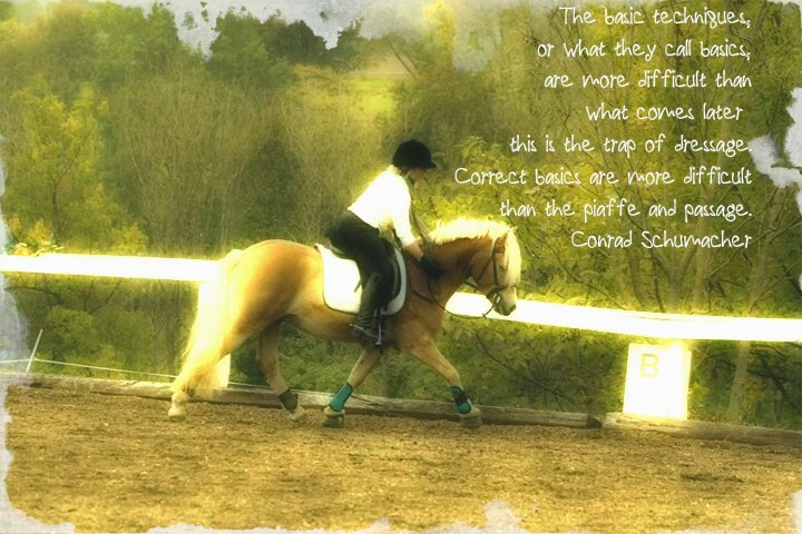 Dressage Hafl: When Less Is More in Horse Training
