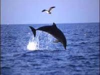 Il delfino e la colomba: canzone per bambini usata molto nelle colonie estive