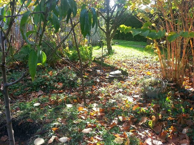 Comprendre jardin for t for Jardin foret