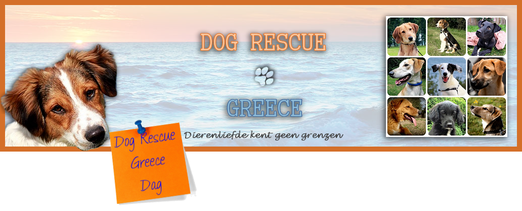 Dog Rescue Greece Dag