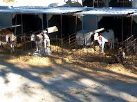 La granja d'El Borrell