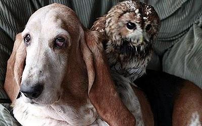 cadela e coruja