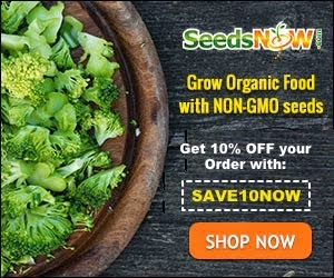 High Quality Organic Seeds