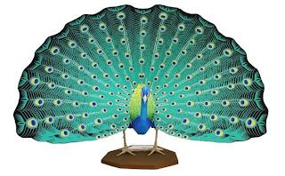 Example of Descriptive Text - Indian Peafowl