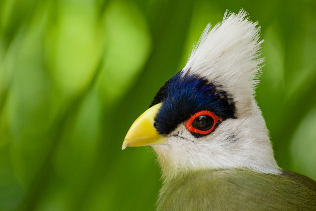 Cuckoo Bird Best Wallpapers