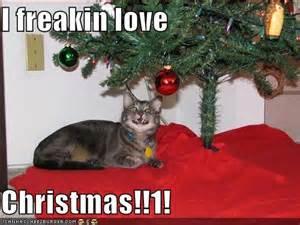 https://files.nyu.edu/kmg357/public/pictures/animals/lovechristmas.jpg