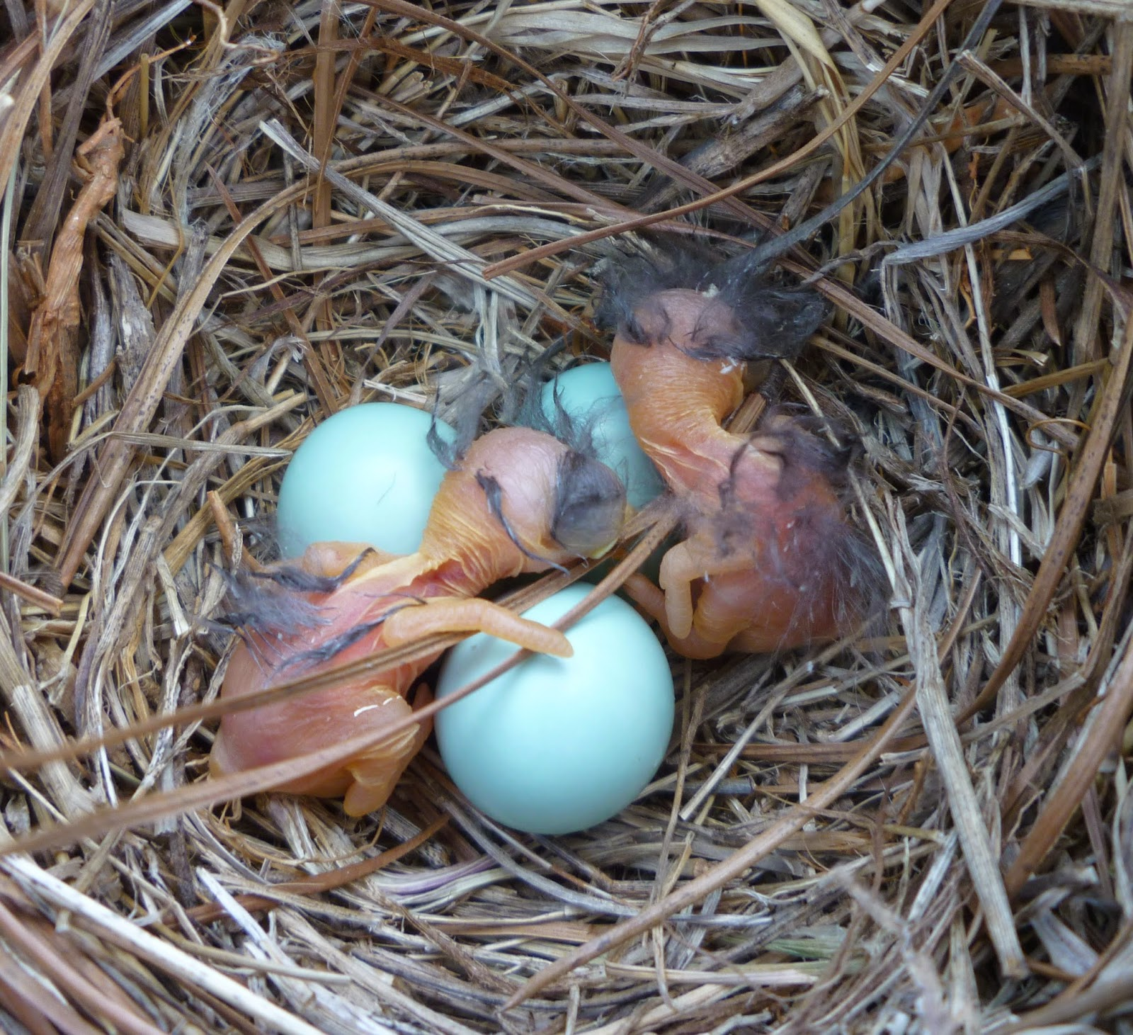 From Bluebirds to Turtles: CONTENT OF BIRD NESTS ON APRIL ...