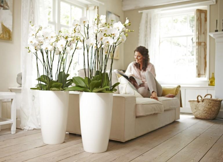 Vision on living groene stylingtips for Grote planten voor binnen