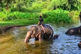 الصبي والفيل