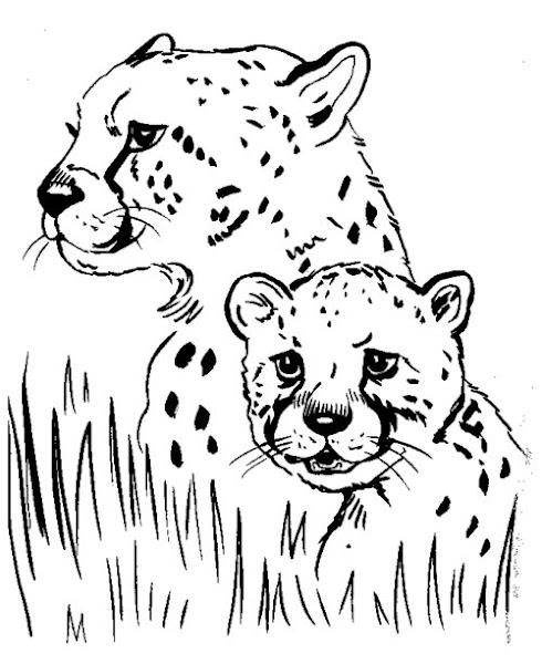 Cheetah Animal Coloring Pages