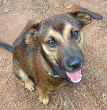 Grafton Rescue Dogs