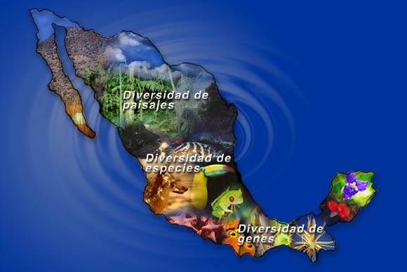 importancia biodiversidad mexico mundo: