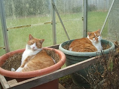 and two Devon cats...