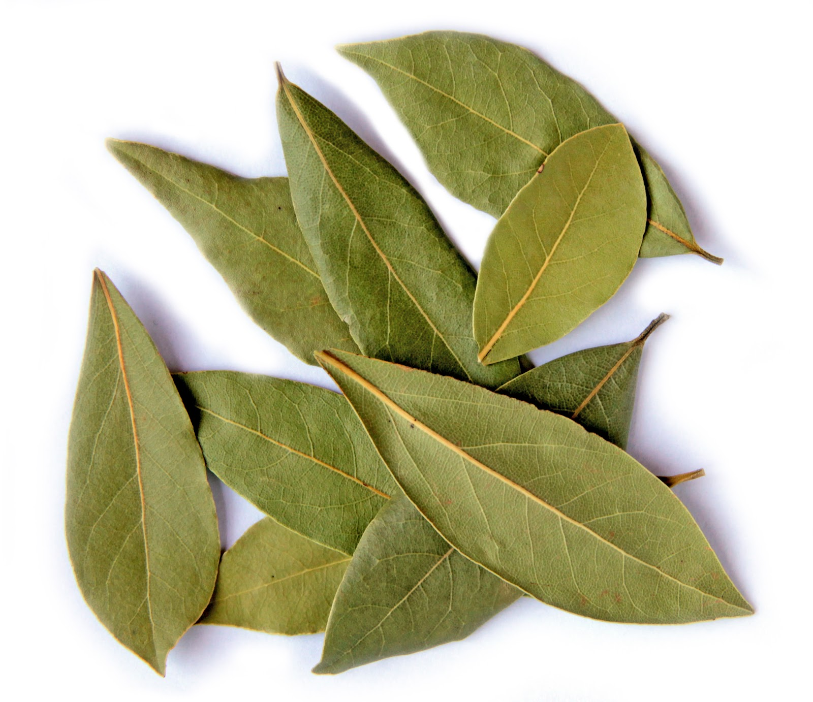 Biodiversity heritage library for europe spice of the week bay leaf - Cook bay leaves ...