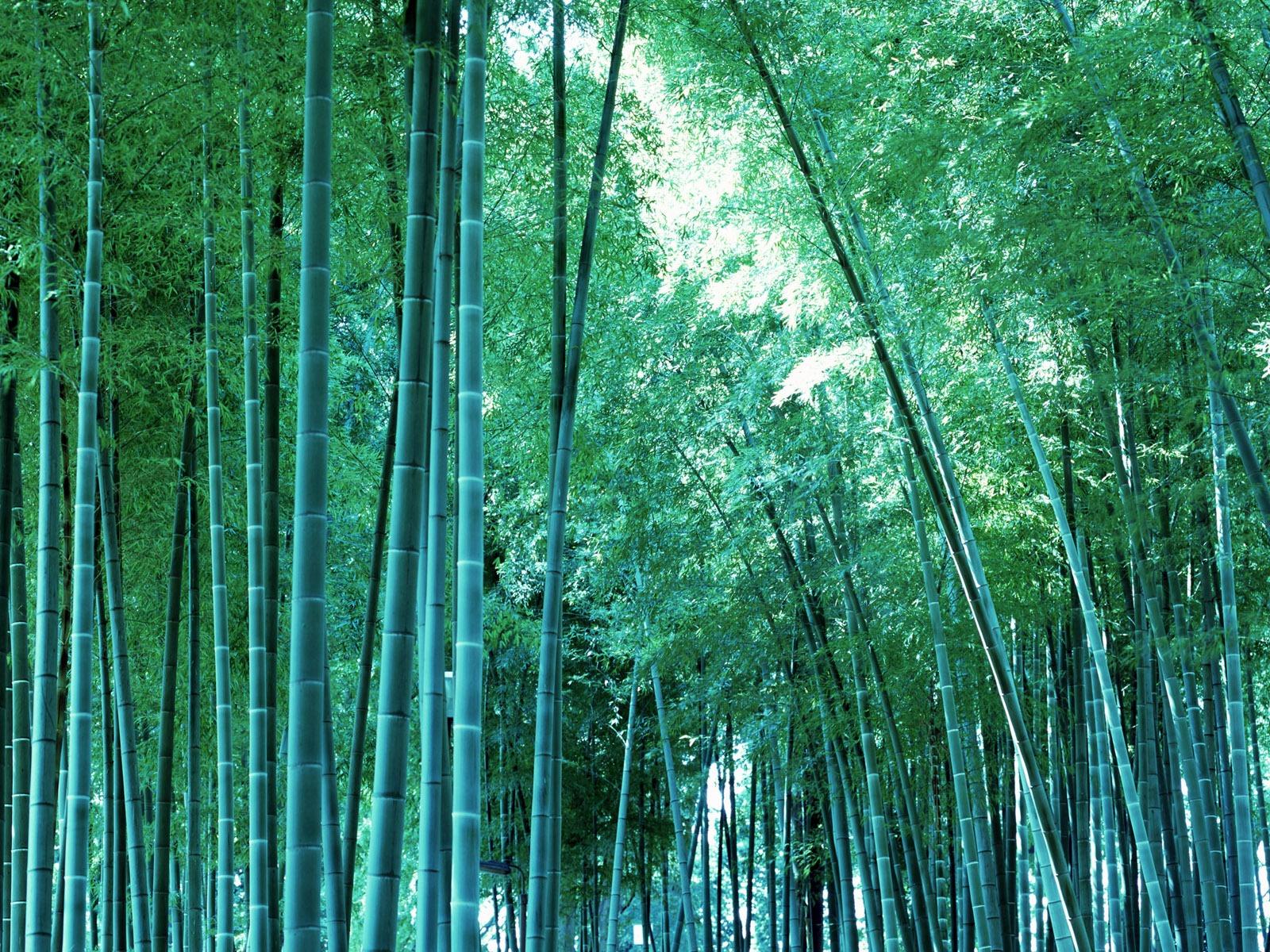 http://3.bp.blogspot.com/-SSA9Kw5ILaI/Tqax_SNQE_I/AAAAAAAABME/hWyJNF7wH1A/s1600/bamboo_print_wallpaper.jpg