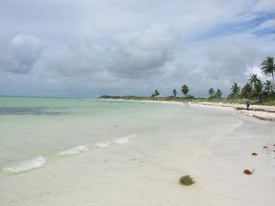 Sandspur beach