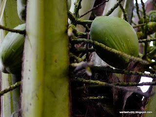 Pepsi dan Coca-Cola berebut kuasai pasaran air kelapa di Amerika!