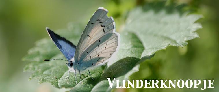 Vlinderknoopje