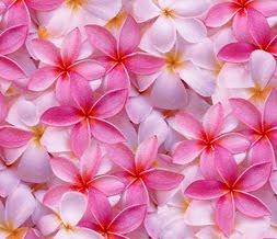 Wedding flowers pink flower background wallpaper 2012 images pink flower background mightylinksfo