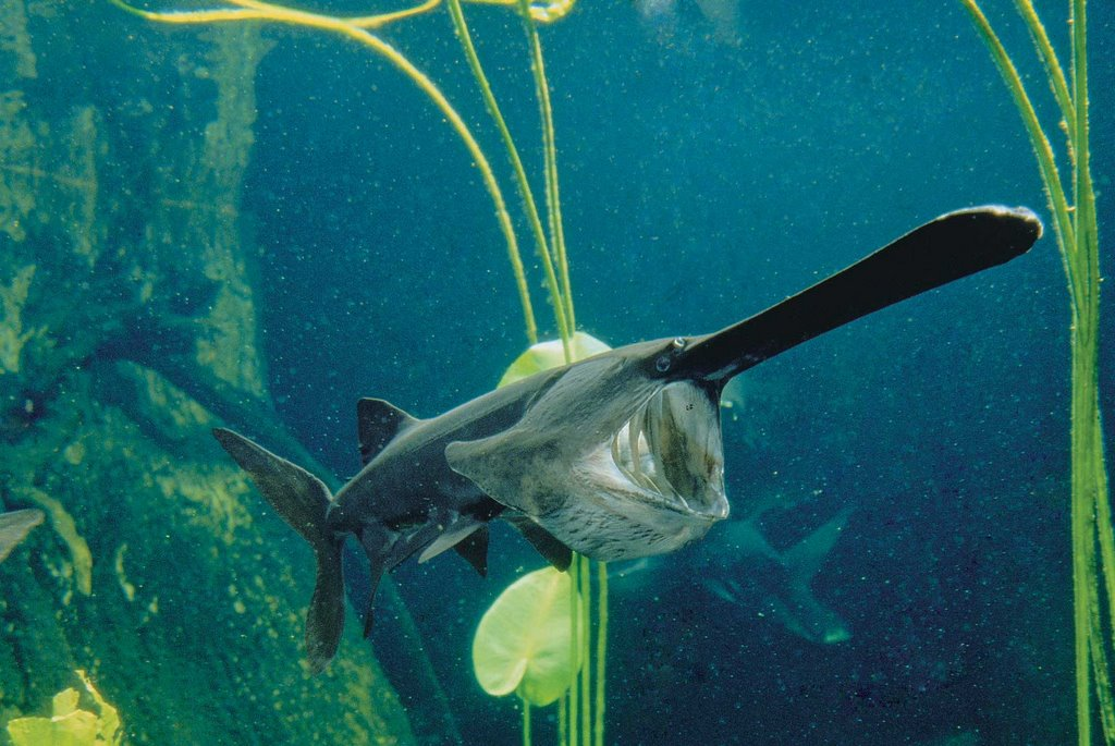 The fisheries blog top 10 weirdest things found on a fish for Weird looking fish