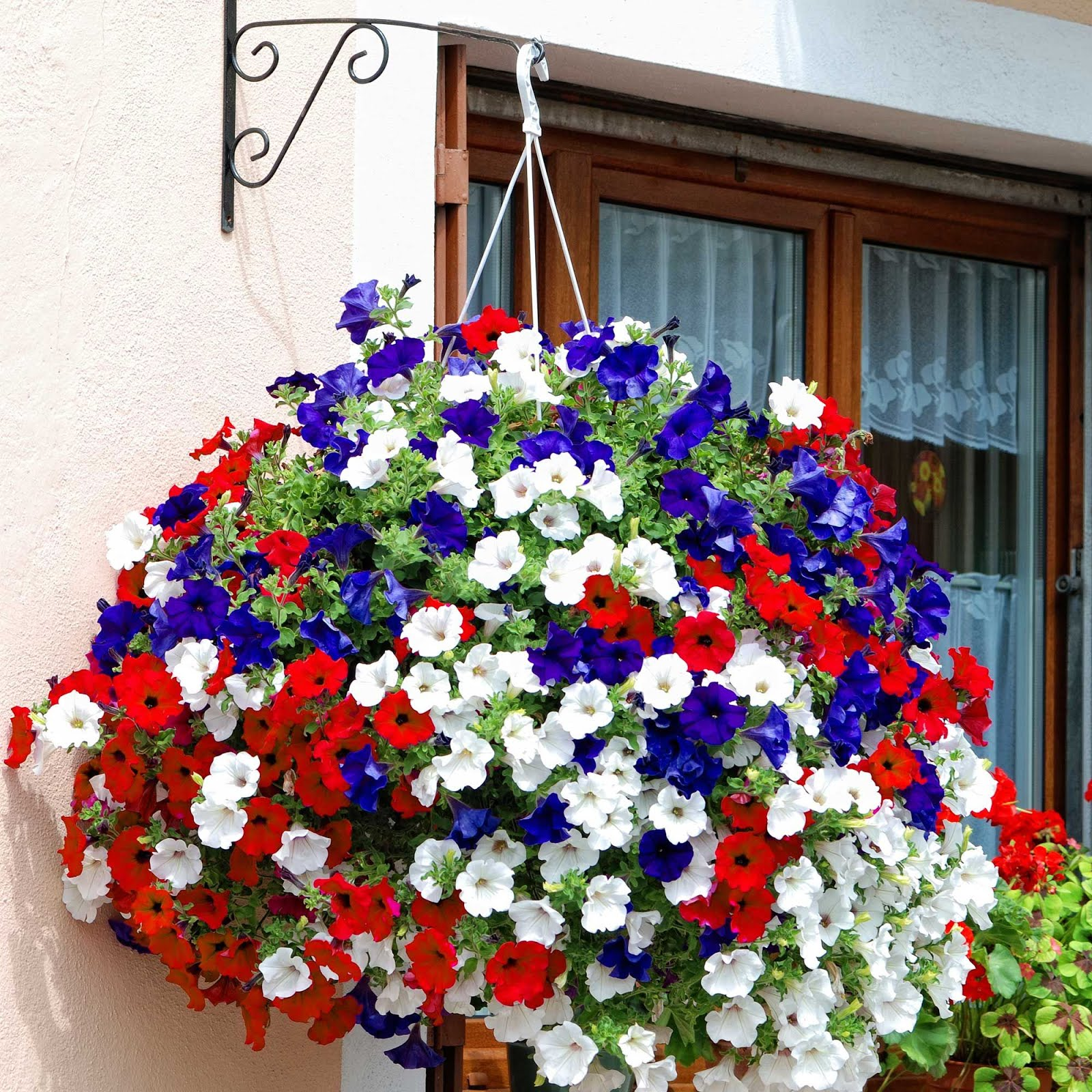 Two men and a little farm red white blue flowers inspiration thursday red white and blue hanging basket image via southernliving izmirmasajfo