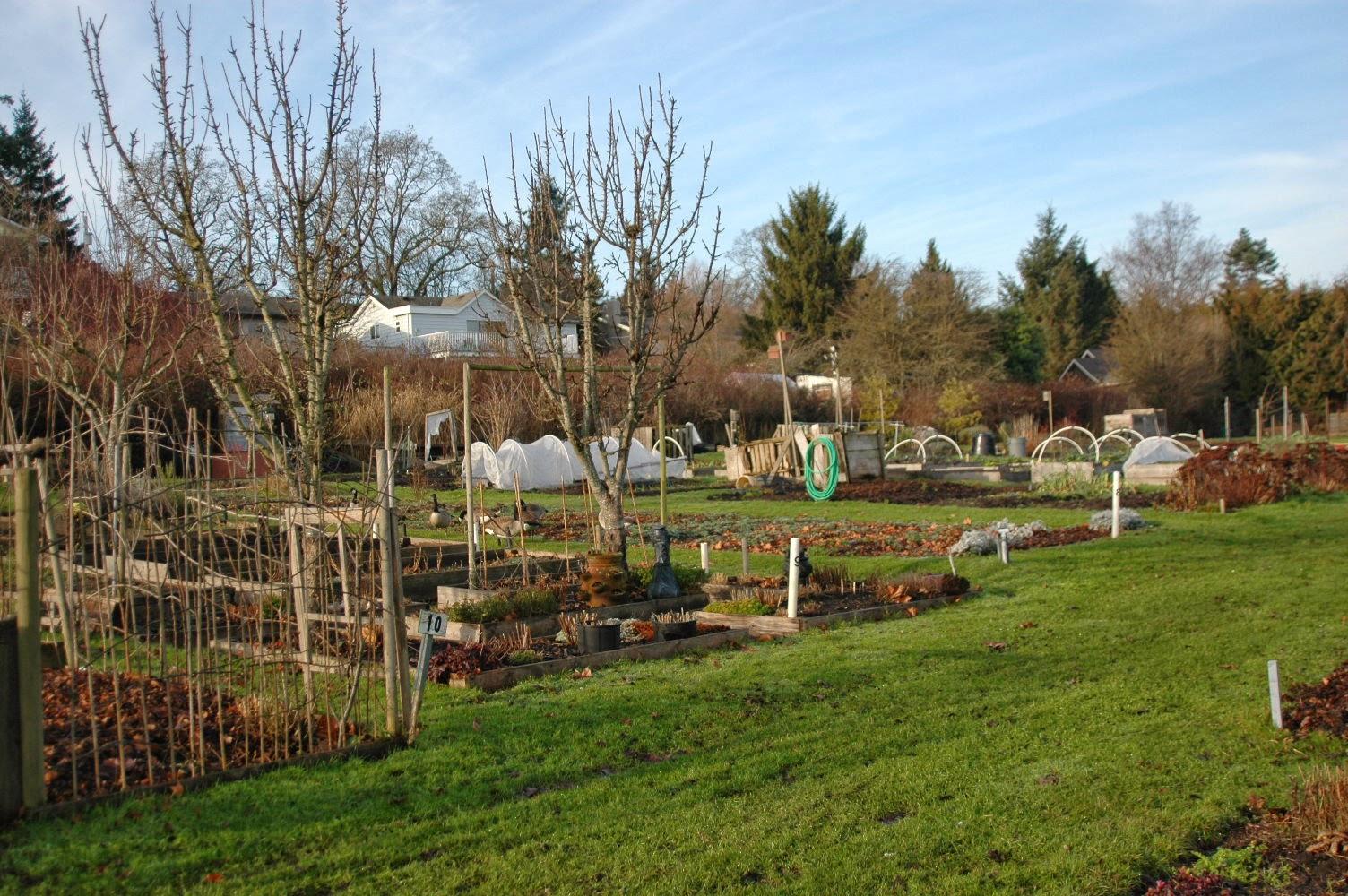 Allotment gardens, Victoria, C.B.