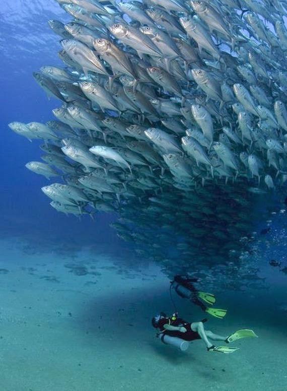 baile subacuatico en el mar de peces gato