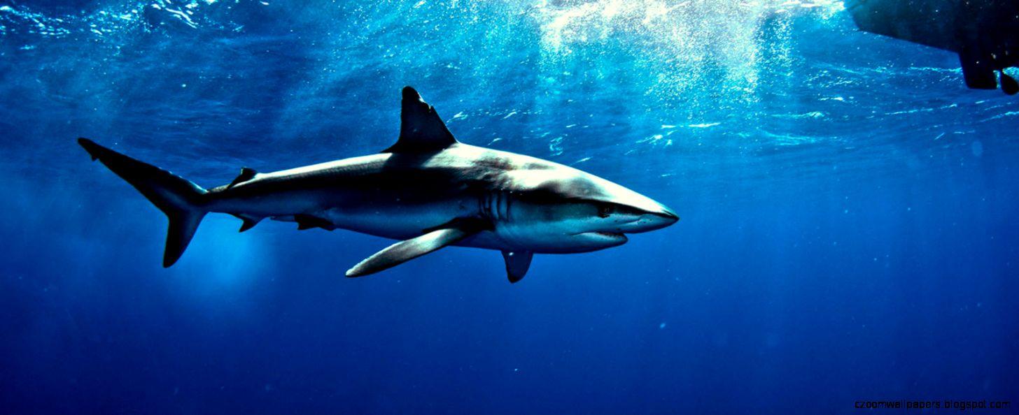 Shark Made Millionaires · Turning Million Dollar Ideas Into