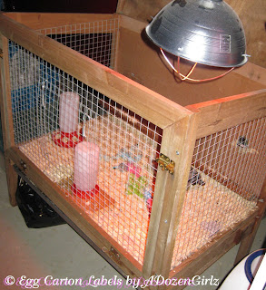 Rabbit hutch brooder with heat lamp