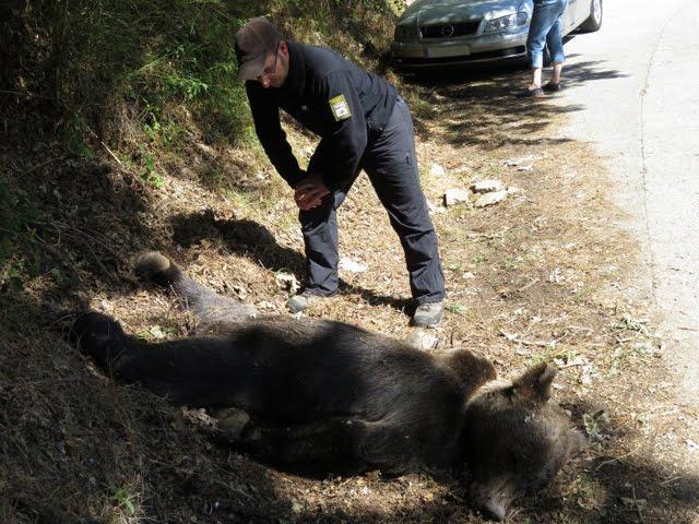Ritual Quer: el oso muerto es Calisto