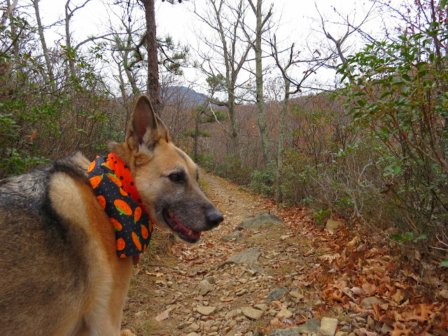 Shawnee on their Halloween hiking trip in Shenandoah National Park