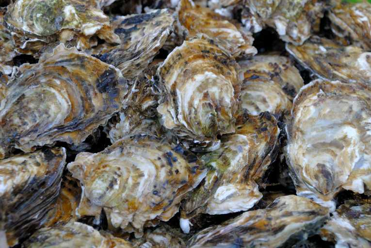 polyaspartic acid in oyster shells as Effects of oyster shell on soil chemical and biological properties and cabbage productivity as a  with the exception of acid  waste oyster shells for.