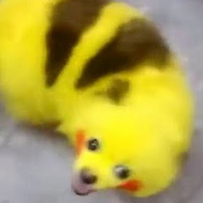 Dog Into Pikachu!