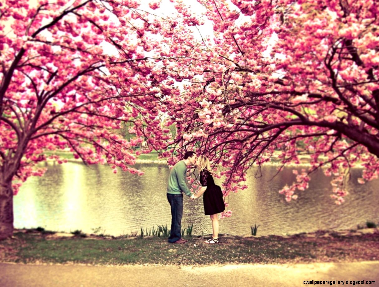 Sakura Tree Flower Spring Pond Couple Kiss Love Nature 1280x1024