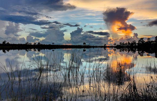 美国佛罗里达大沼泽地 - 纽约文摘 - 纽约文摘