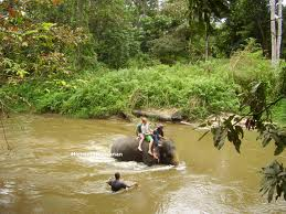 Kuala Gandah Elephant Sanctuary Adventure Tour