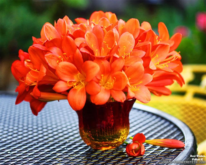 Good Morning Orange Flowers : Lovers india good morning and have a nice
