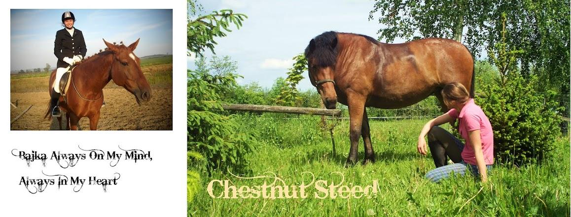 Chestnut Steed