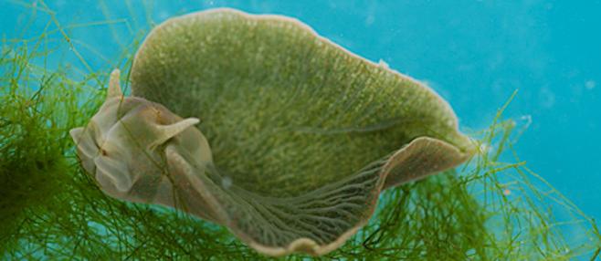 Animales Autotrofos, y Fotosinteticos