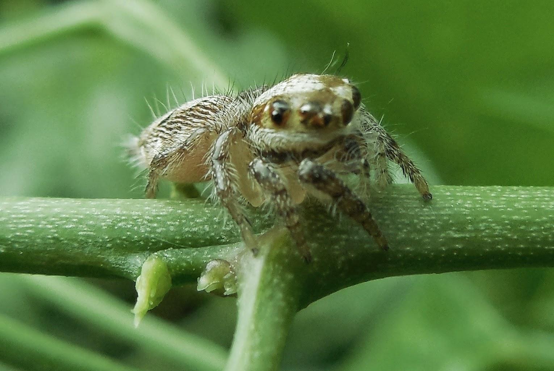 gambar laba-laba nama hewan dari huruf L