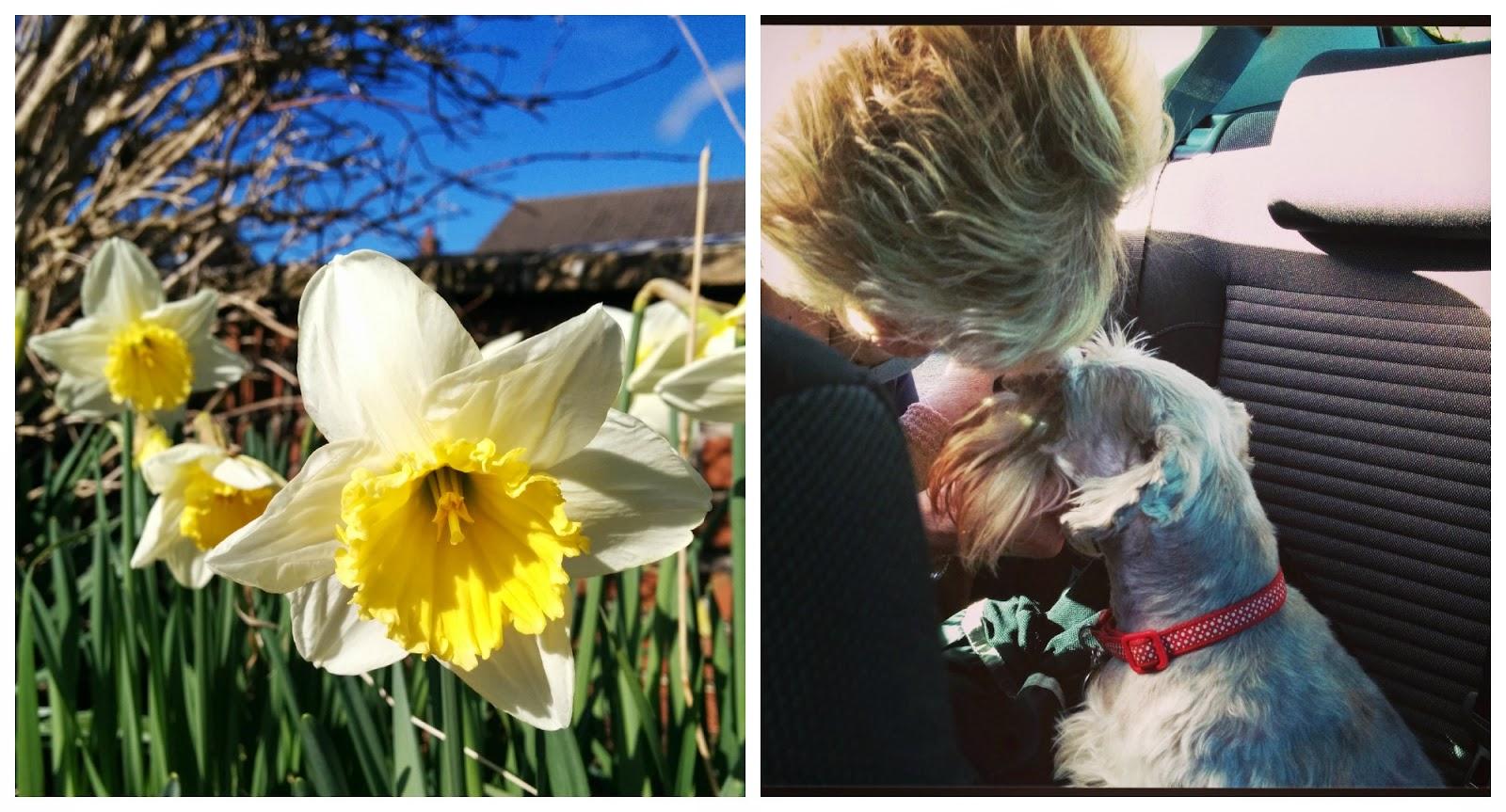 Day 1, Mamma G's - growourown.blogspot.com ~ alloment blog