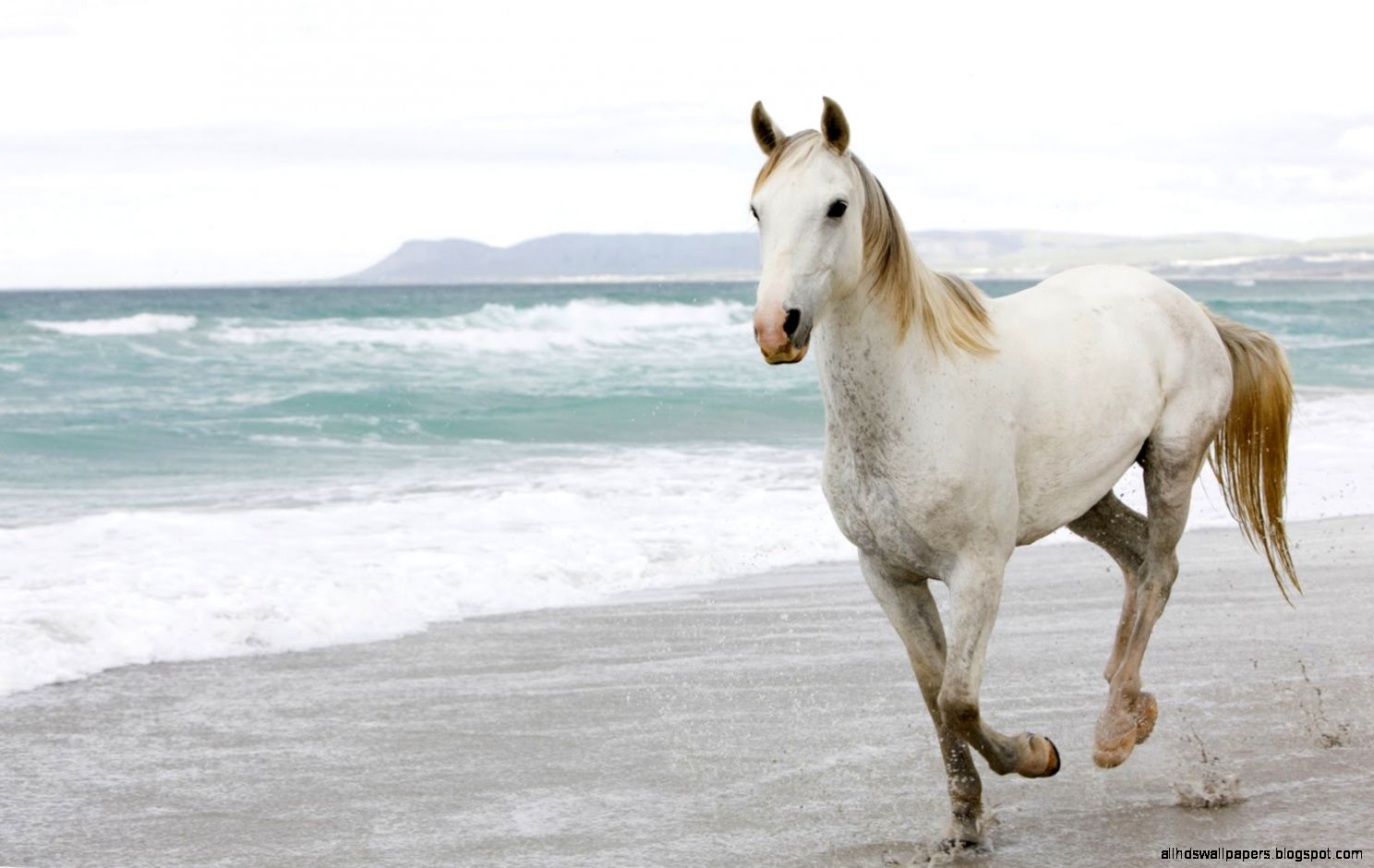 Best   Wallpaper Horse Wall - horse-wallpaper-collection-39  Pictures_469891.jpg