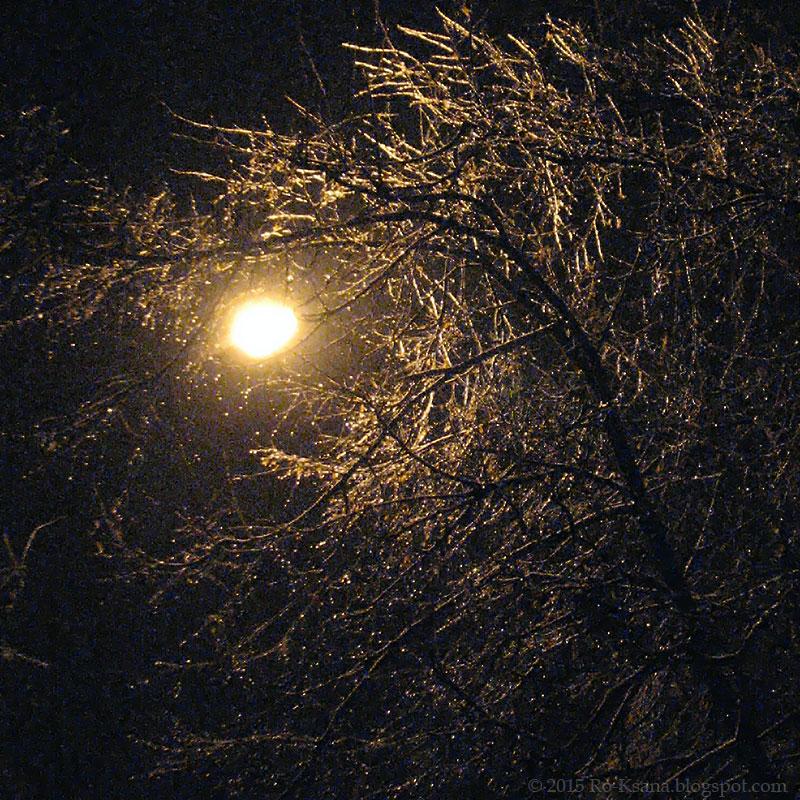 Iced tree 03.30.2015 Обледеневшее дерево в конце марта