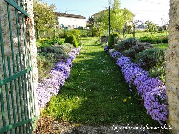 Le jardin de sylvie en photos entr e du jardin de sylvie - Phlox vivace couvre sol ...