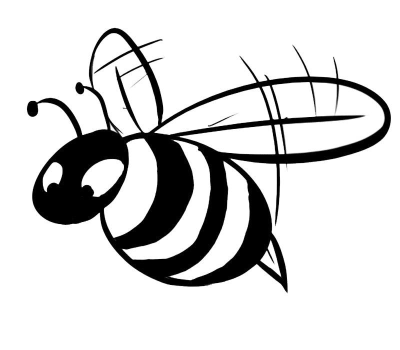 Blog megadiverso bichos para pintar y descargar - Fotos de insectos para imprimir ...