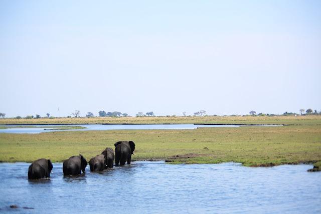 Elephant, Chobe National Park, Botswana - Kim Jay Photography