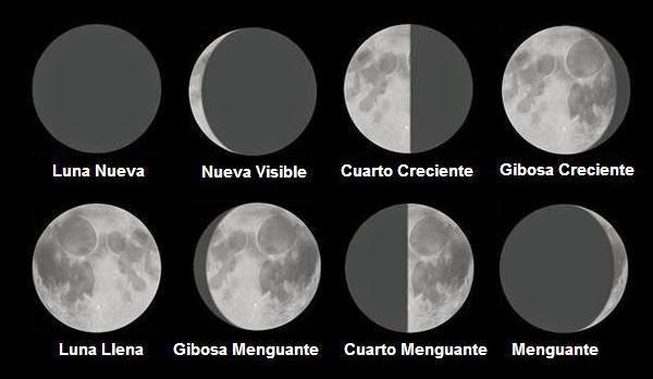 Gente que florece for Q fase de luna es hoy