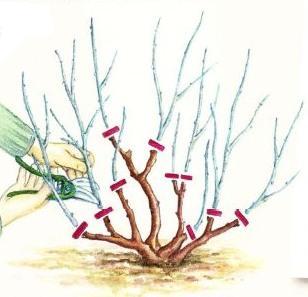 Осенняя обрезка растений