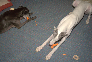 Blue and Bettina greyhounds love carrots